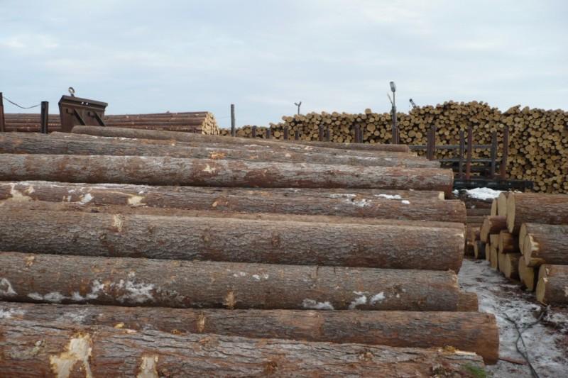 Пиловочник хвойных пород древесины