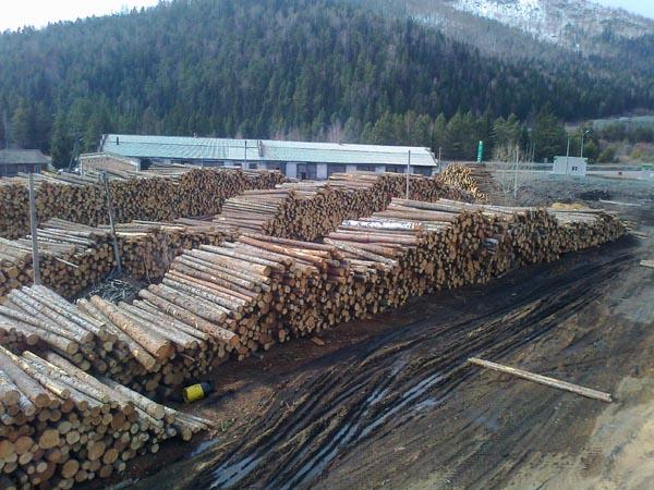 Case di tronchi, bagne di cedro, larice, pino (siberia)