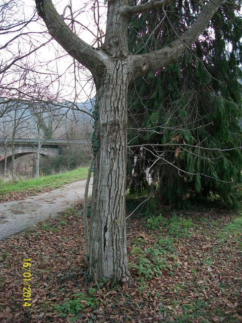 Piante Di Noce : Piante di noce nazionale woodbusinessportal