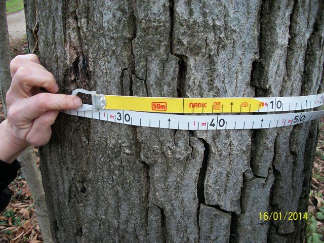 Alberi di noce nazionale da legno for Alberi in vendita