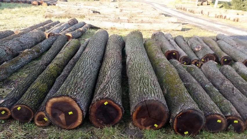 Black Walnut Logs For Sale Woodbusinessportal Com