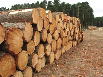 cherestea de rasinoase , cherestea de fag , stejar , molid , brad si lemn tropical