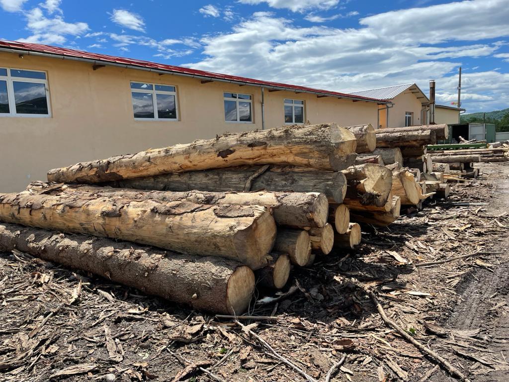 Vindem lemn rotund molid, brad si duglas