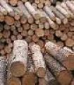hardwood and softwood logs
