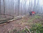 Servicii exploatare forestiera